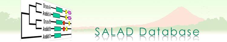 SALAD Database
